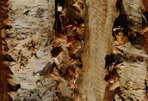 polttopuu, koivuklapi, sekaklapi, takkapuu